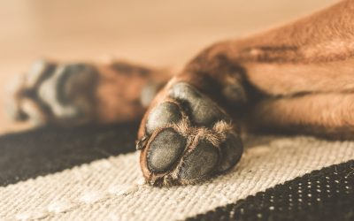 Vijf tips om je hond te helpen ontspannen